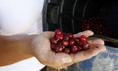 La producción de café de Colombia crece un 11 % en febrero
