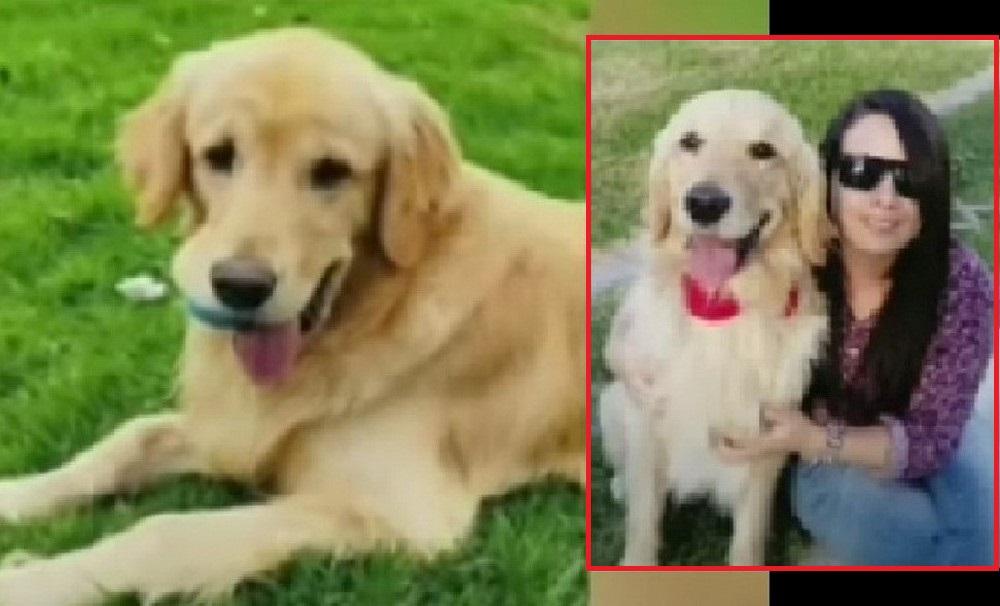 Mujer se vino de Chile a Bogotá solo por buscar a su perro 'Saimon'