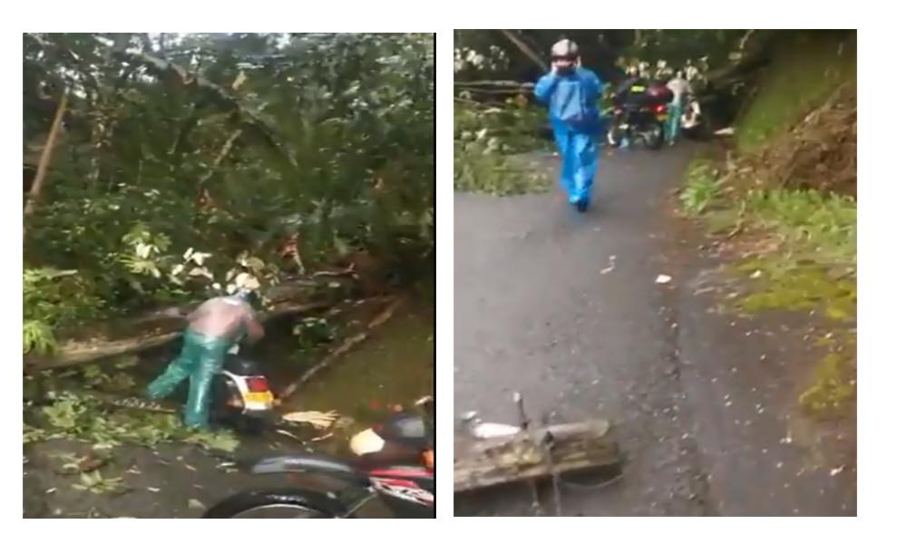 Video: Caída de un árbol bloquea la vía al corregimiento de Santa Elena