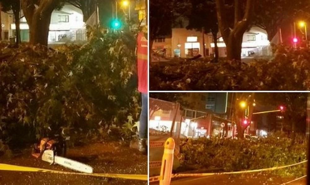 Denuncian tala de árboles nocturna en Bogotá