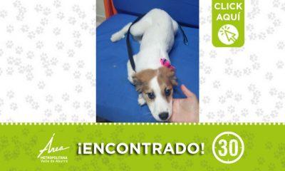 Buscan a la familia de este perrito encontrado en Picacho