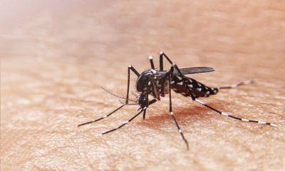 Cali-casos-dengue