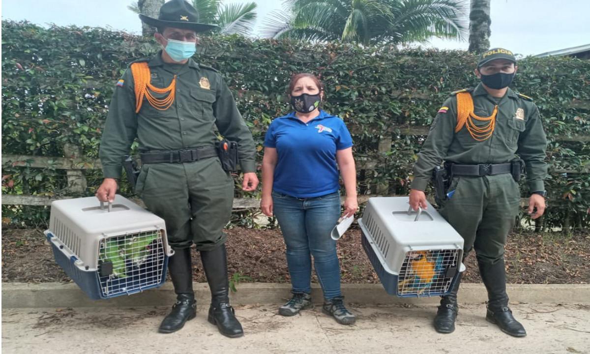 Rescataron guacamayas, sinsontes, gorriones y loras que estaban en cautiverio
