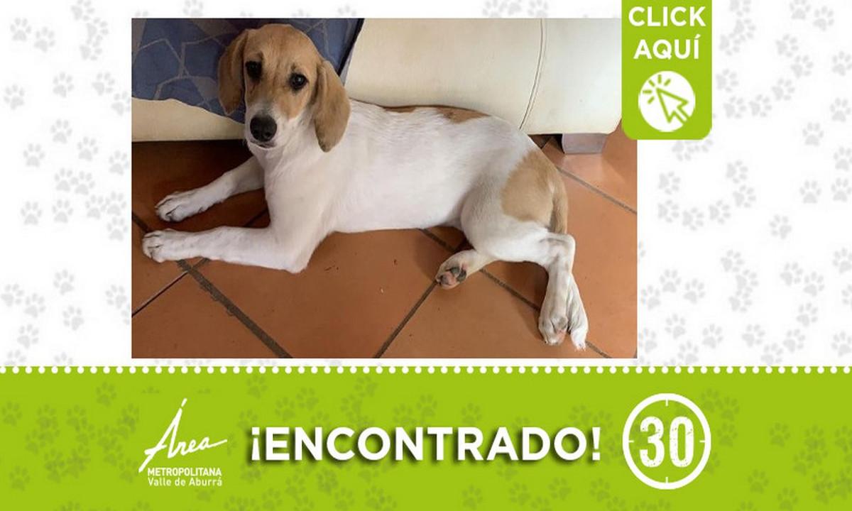 Este perrito fue encontrado en Barbosa ¿Lo reconoce?