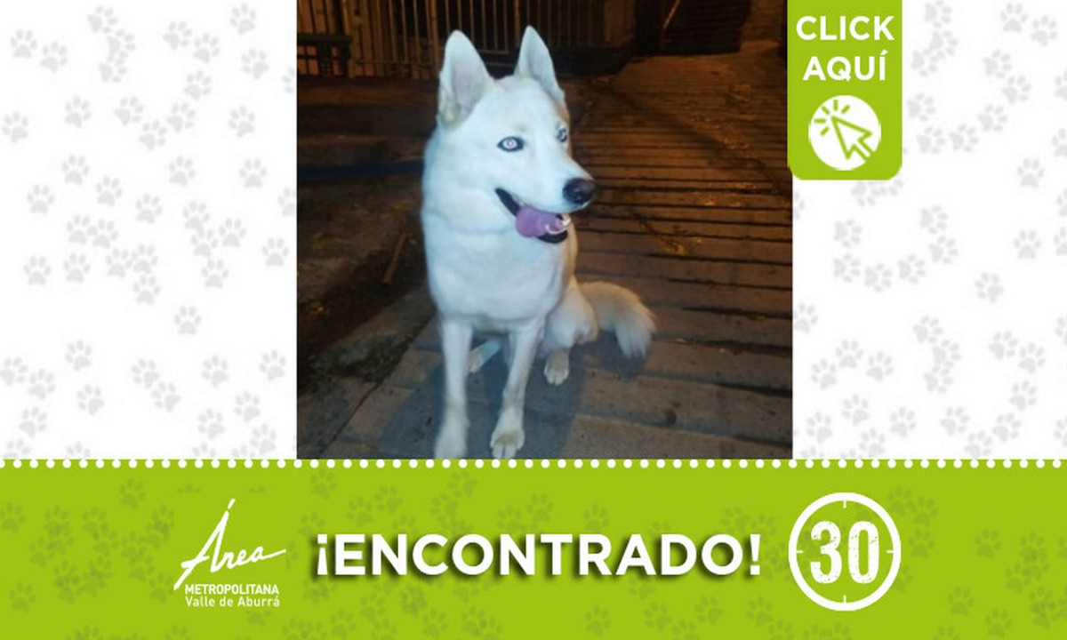 Buscan a la familia de este perrito encontrado en Calasanz