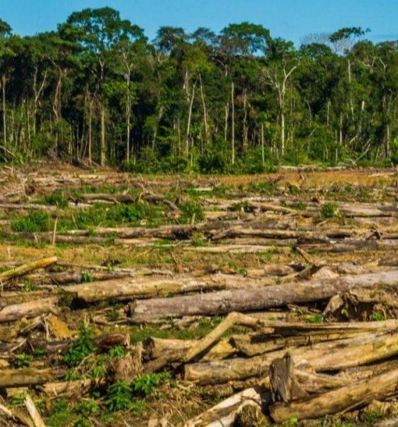 Jair Bolsonaro-deforestación-Brasil