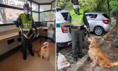 Policía y 'Lila' rescatan boa y tortuga