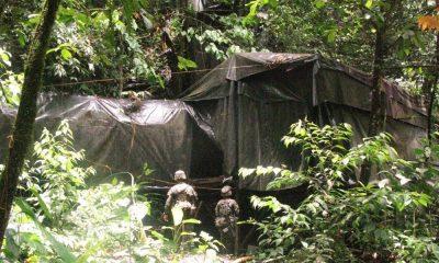 Semillero de coca fue destruido por el Ejército en el Chocó