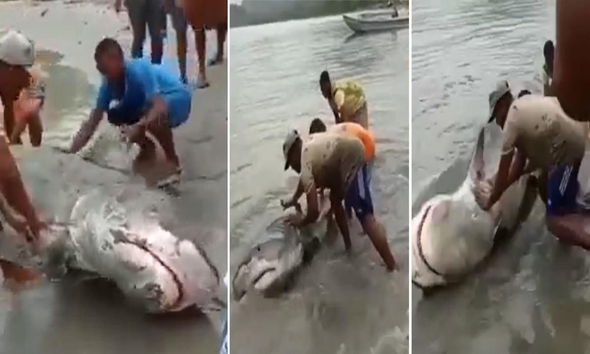 En el Golfo de Urabá regresaron un tiburón al mar
