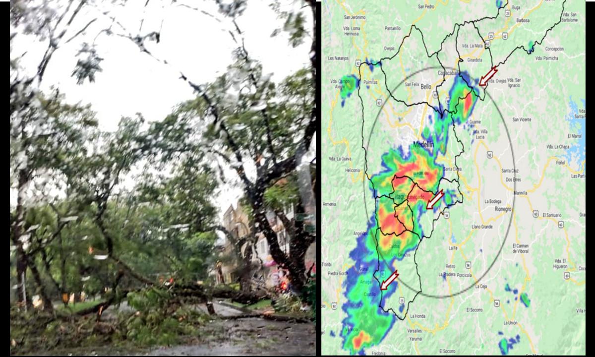 Cinco árboles se cayeron en Medellín durante las fuertes lluvias de esta tarde
