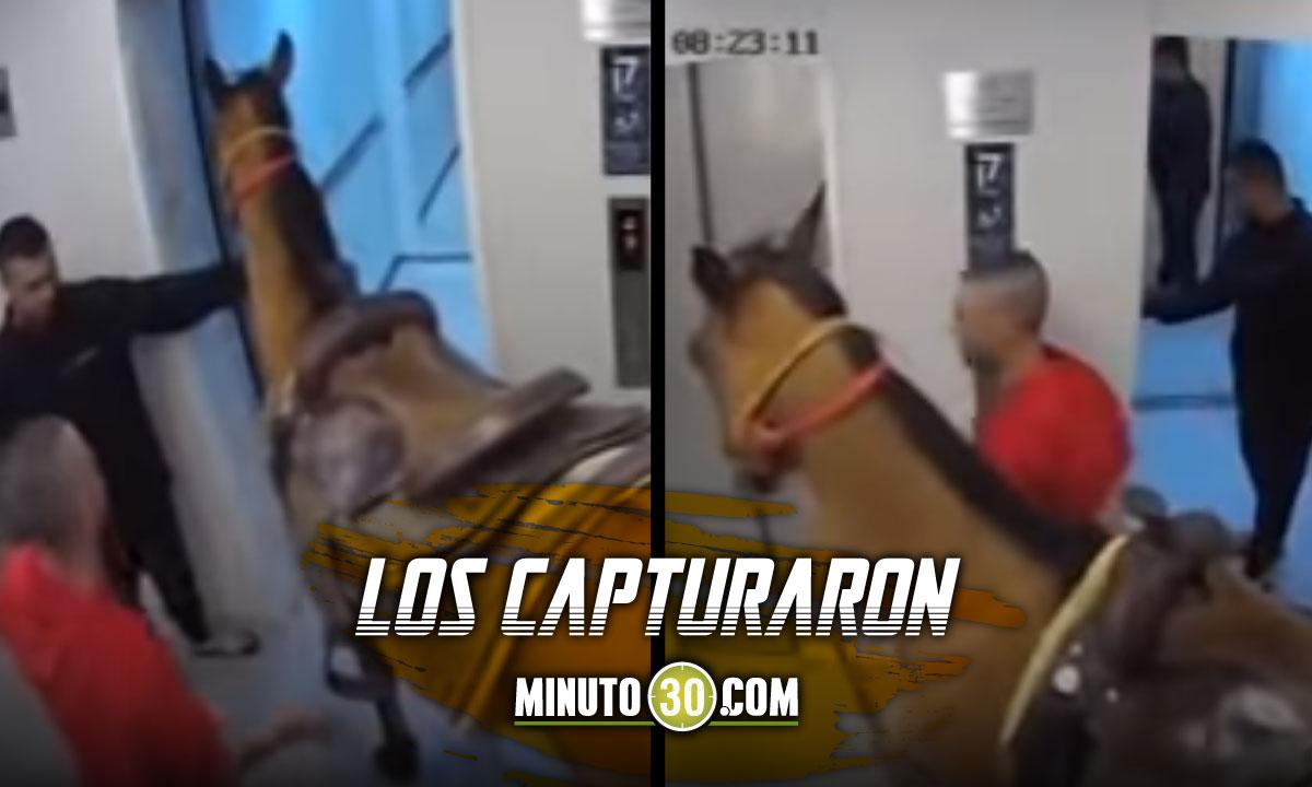 Video: ¡Tan 'charro'! Metieron un caballo al ascensor de un edificio de lujo