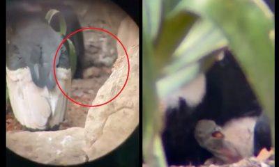 condor andes nacio