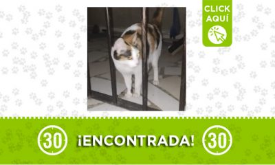 Copacabana-gata-encontrada