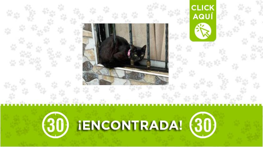 Córdoba-gata-encontrada