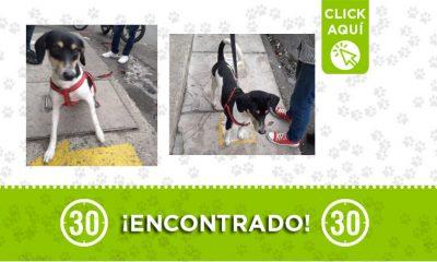 Ayacucho-perro-encontrado