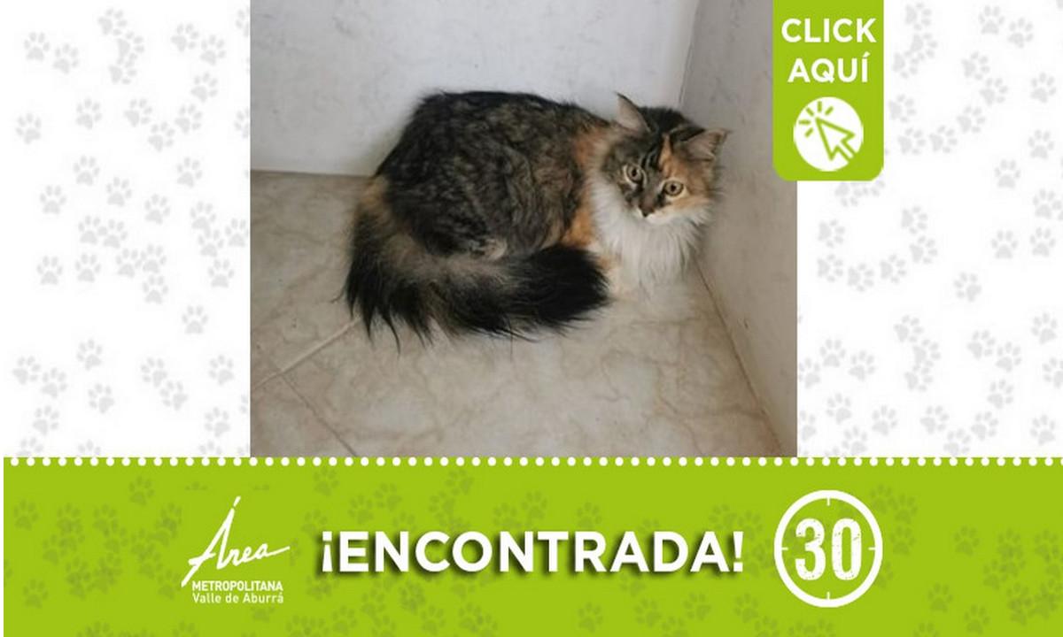 Esta gatica fue encontrada en Bello ¡Comparte!