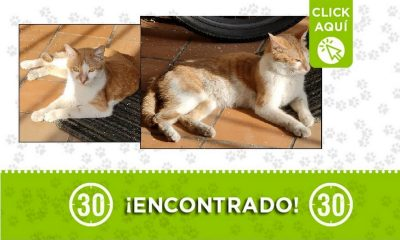 Gatico encontrado