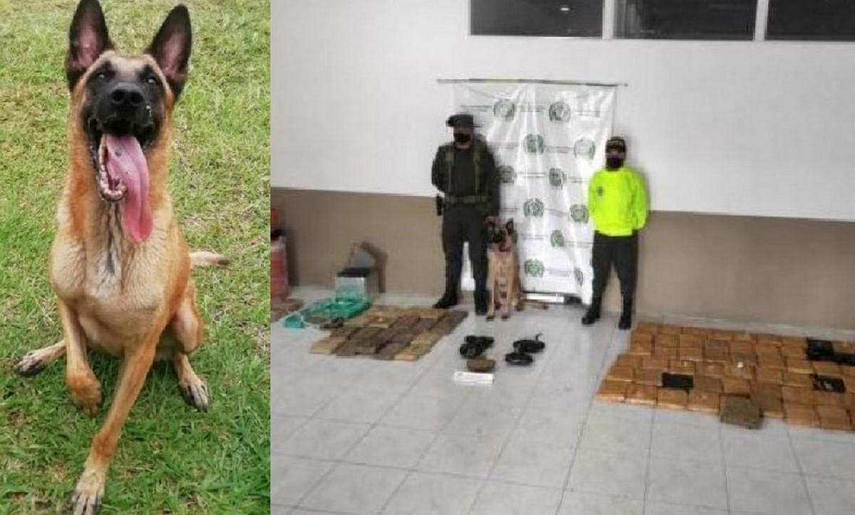 'Mago', el perrito que descubrió 110 kilos de marihuana