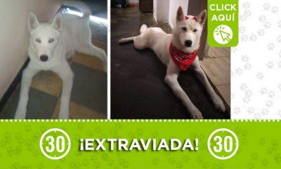 """Buscan a """"Danna"""" en Buenos Aires ¿La ha visto?"""