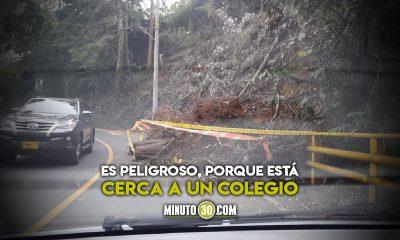 En la Cola del Zorro hay unos arboles en la via y podria presentarse un accidente