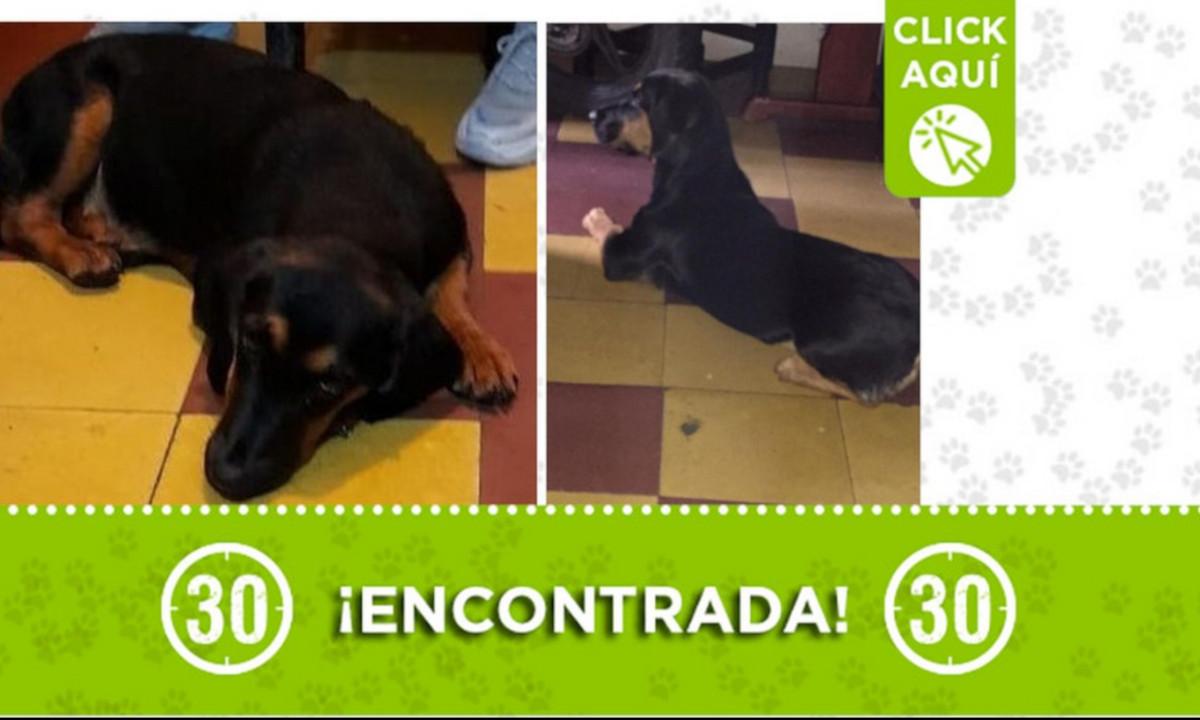 Esta perrita fue encontrada en Robledo ¿La conoce?