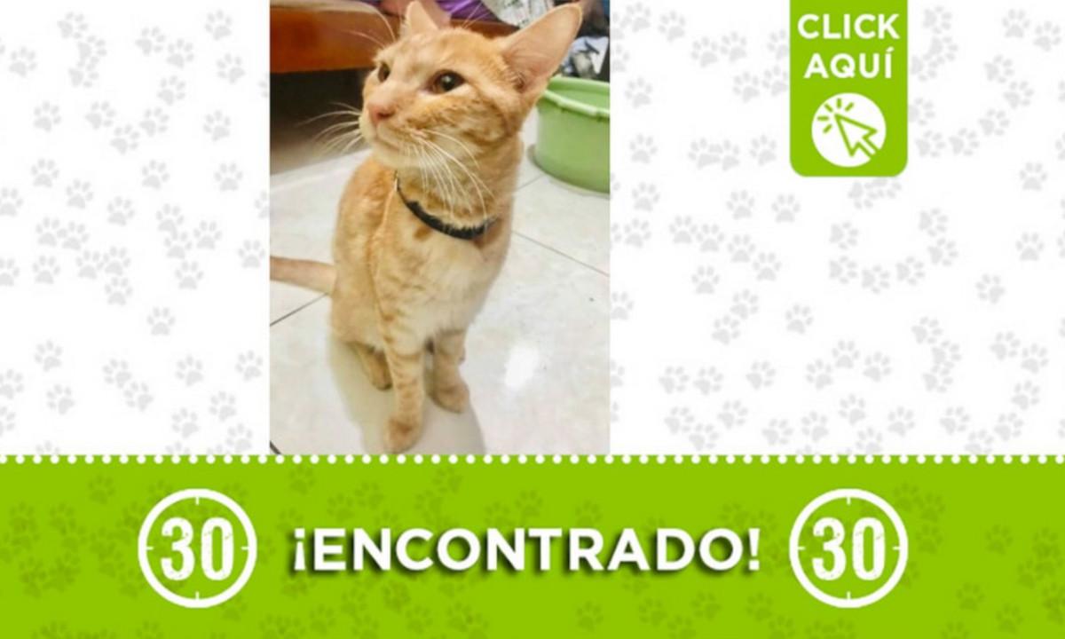 Este gatico fue encontrado en Envigado ¿Es suyo?