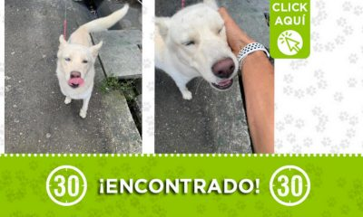 Buscan a la familia de este perrito encontrado en Loreto