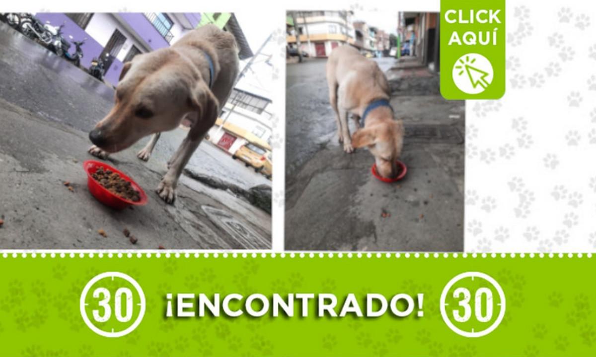 Este perrito fue encontrado en Itagüí ¿Es suyo?