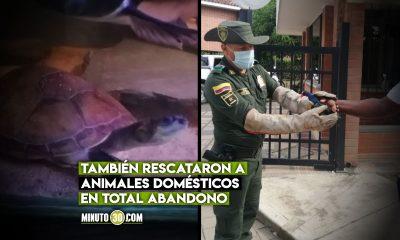 La Policia en Uraba rescato a 42 animales silvestres