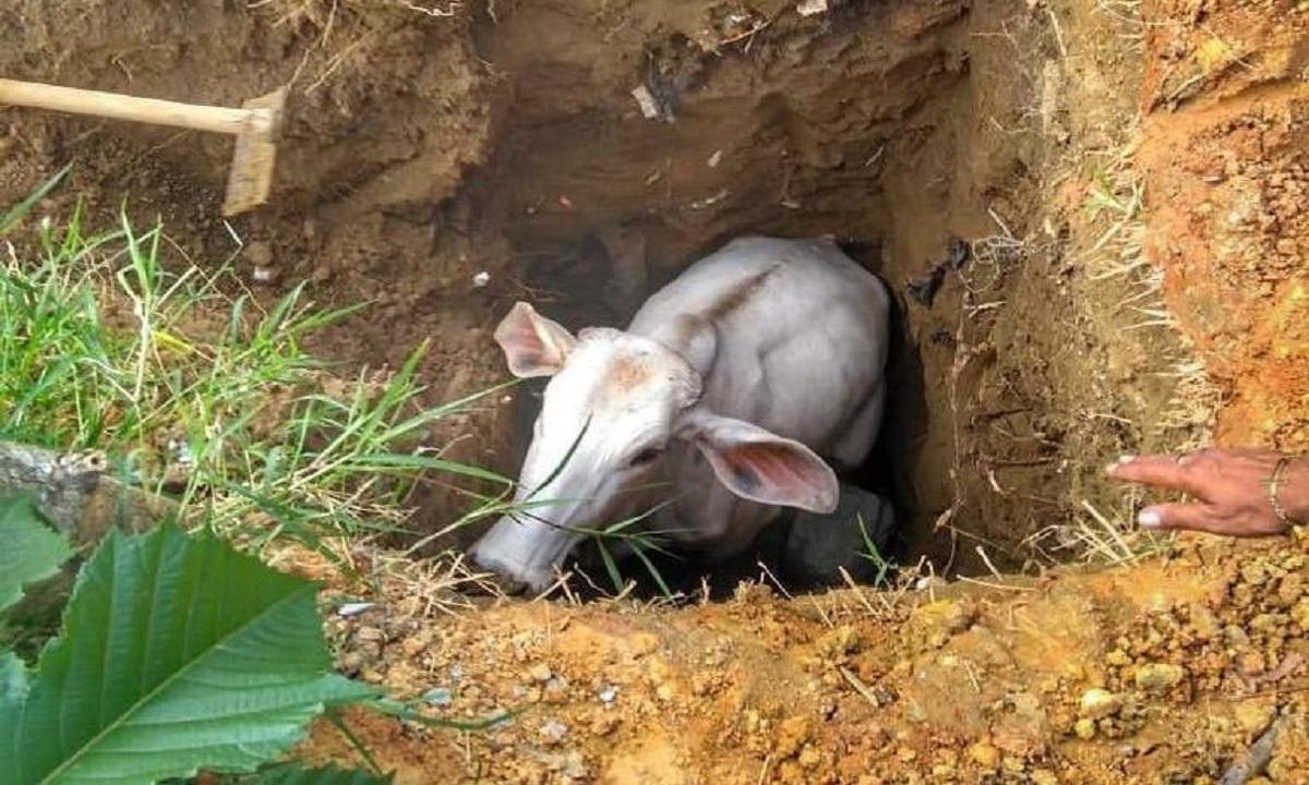 Medellin animales rescatados