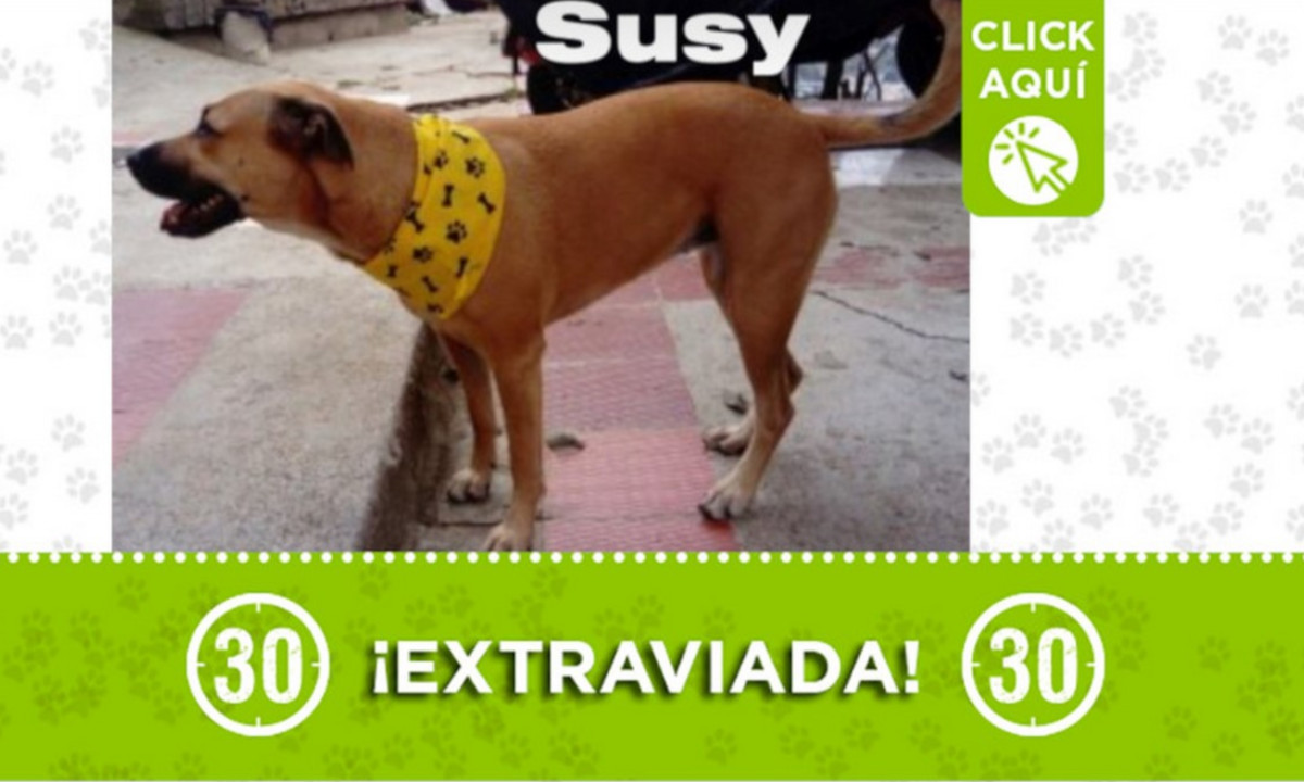 """""""Susy"""" se perdió en Andalucía, ¿La ha visto?"""