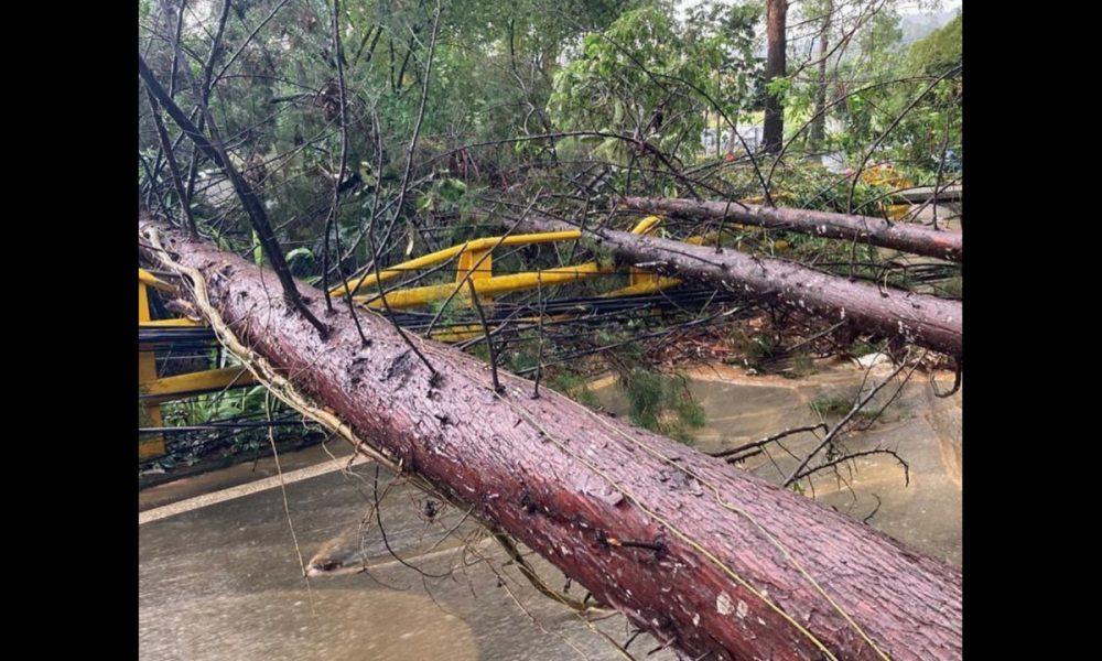 [Videos] En Medellín 30 desplomes de árboles, cinco deslizamientos y 25 inundaciones tras lluvias de esta tarde