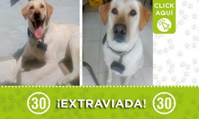 """""""Canela"""" se perdió en Zamora ¿La ha visto?"""