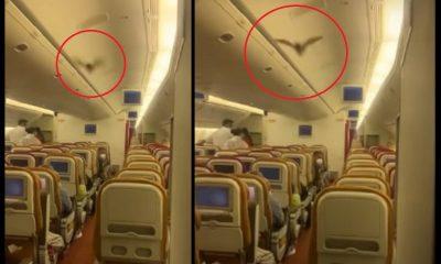 avion murcielago panicop