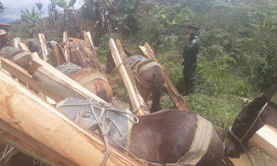 capturado urrao madera ilegal