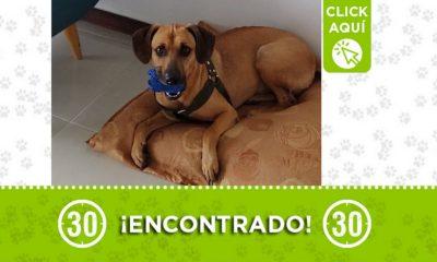 Este perrito fue encontrado en Itagüí ¿Lo conoce?