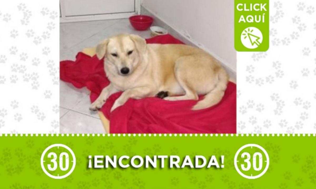 Esta perrita fue encontrada en Calasanz ¿La Conoce?