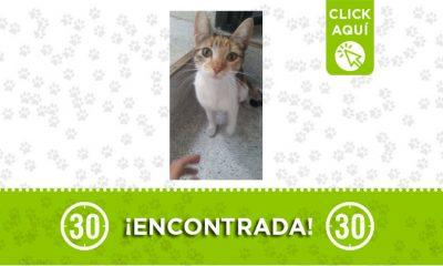 Prado Centro-gata-encontrada