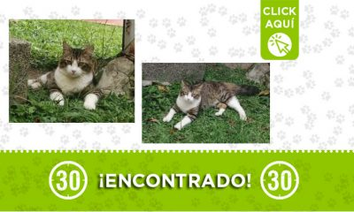 Serramonte-Bello-gato-encontrado