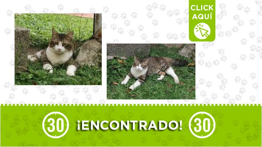 Serramonte-Bello-gato-encontrado