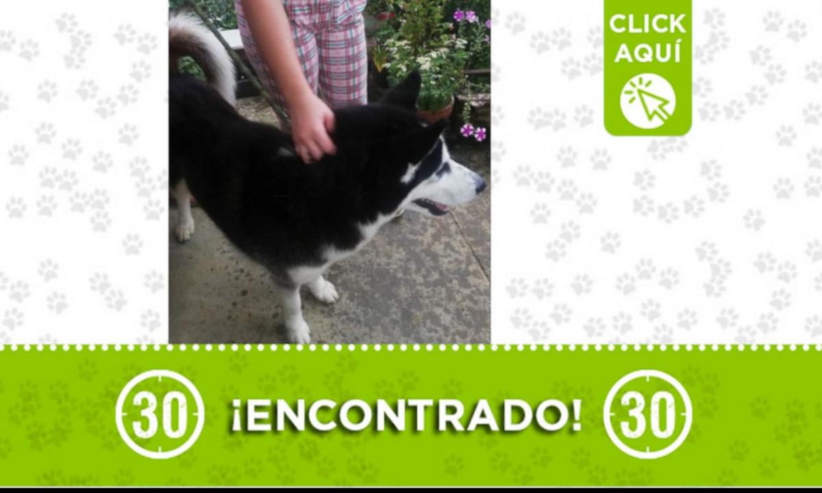 Buscan a la familia de este perrito encontrado en Palos Verdes