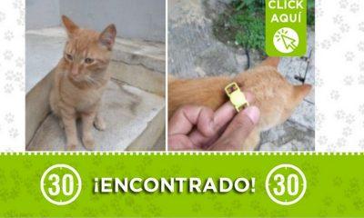 encontrado gatico aranjuez