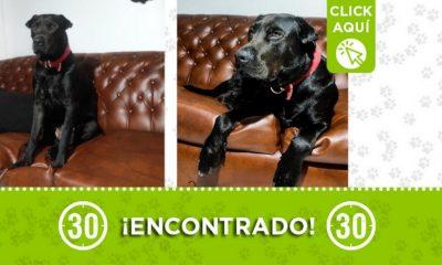 Este perrito fue encontrado en Belén, La Palma ¿Lo conoce?