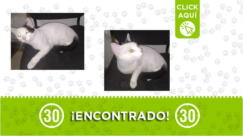 Itagüí-gato-encontrado