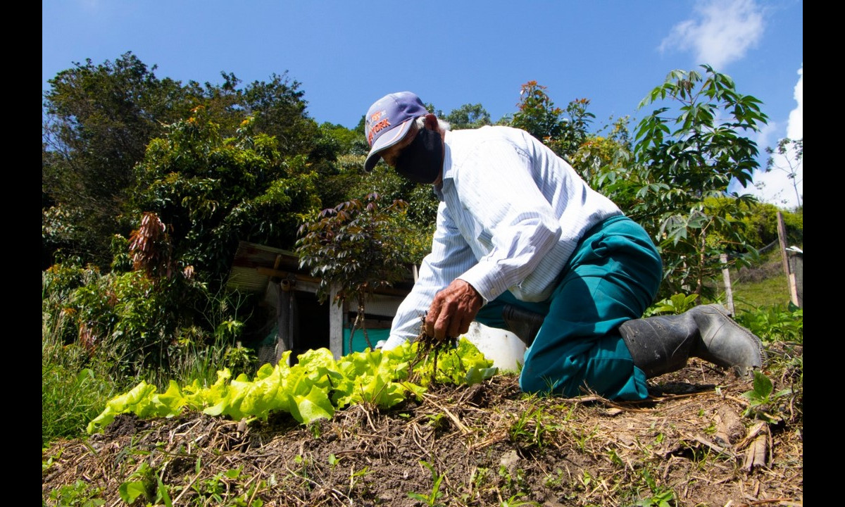 El proyecto de huertas para el autoconsumo en Medellín recibió reconocimiento de la ONU
