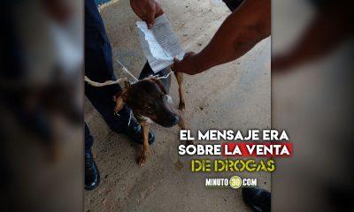 'El Cartero', Pillaron a un perro con mensaje para presos de una cárcel panameña