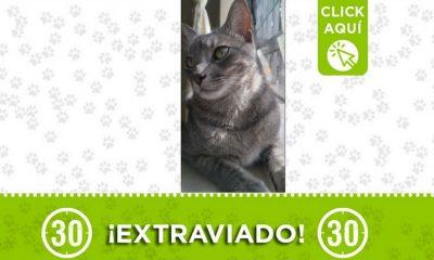 milo guayabal gato perdido