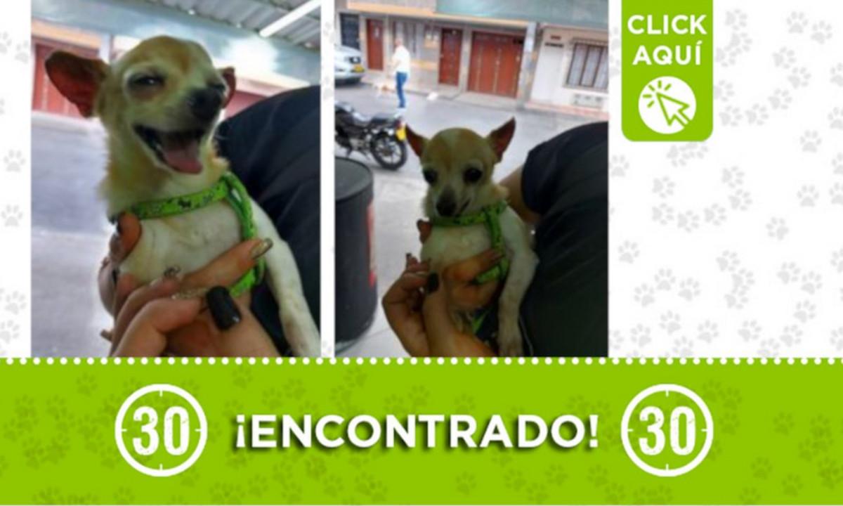 Este perrito fue encontrado en Bello Horizonte ¿Es suyo?