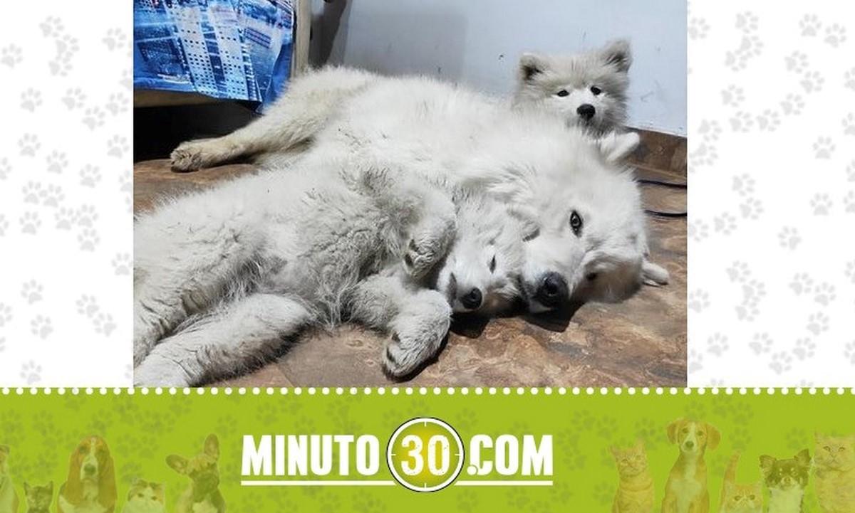 Estos perritos se perdieron en Enciso, por el mirador del Pan de Azúcar