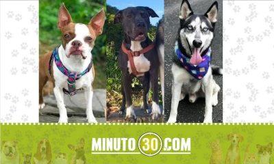 Siguen buscando a 'Max', 'Juanita' y 'Cleo'